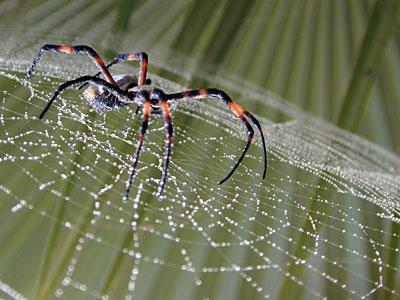 Novedades sobre las arañas.