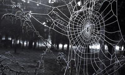 Sobre las arañas